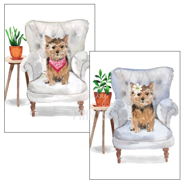 A5 Print - Norfolk Terrier Collection