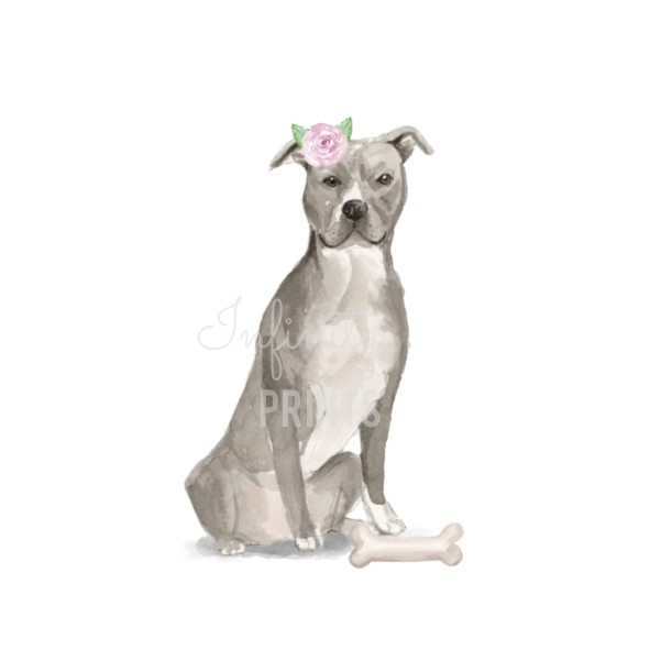 A4 Print - American Staffordshire Terrier Female